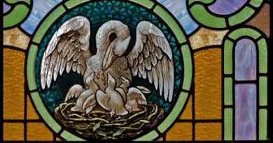 pelican legend