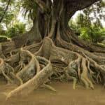 As raízes da Maçonaria Especulativa