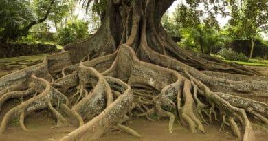 roots hg54erew